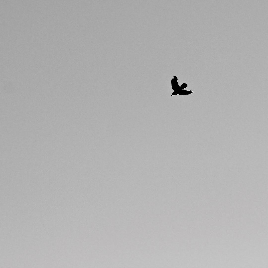Flugsilhouetten 3: DIE RABENKRÄHE