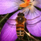 Flugstudie einer Honigbiene