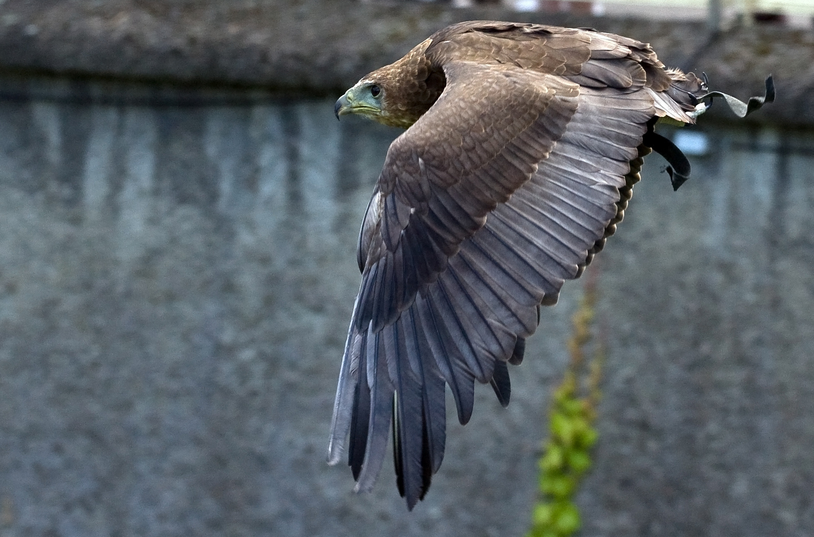 Flugstunde im Kölner Zoo