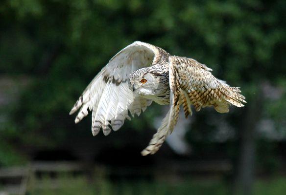 Flugvorführung Wildpark Poing