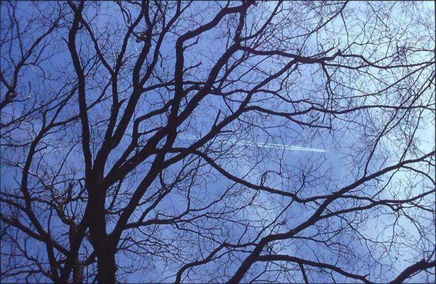 Flugzeug im Baum