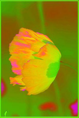 fluofleurs