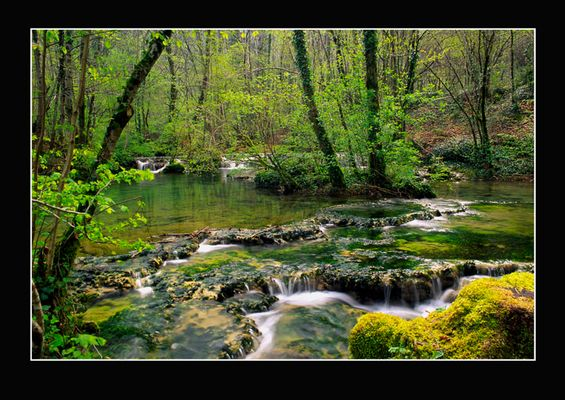 Fluss im Frühlingswald