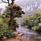 Fluss im Regenwald