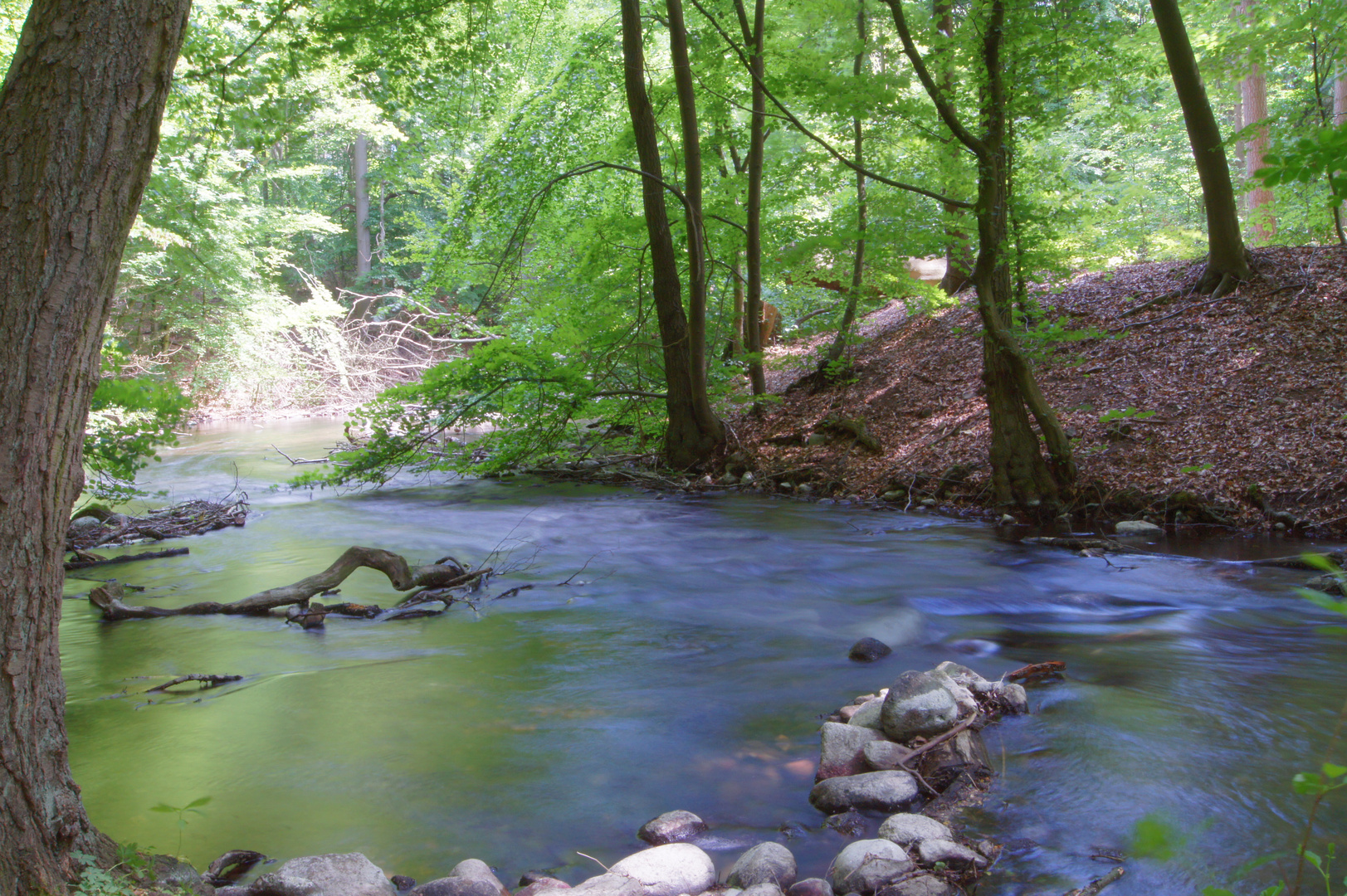 Fluß im Urwald