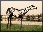 Fluß-Pferd?!?