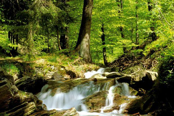 Fluß Steinbach