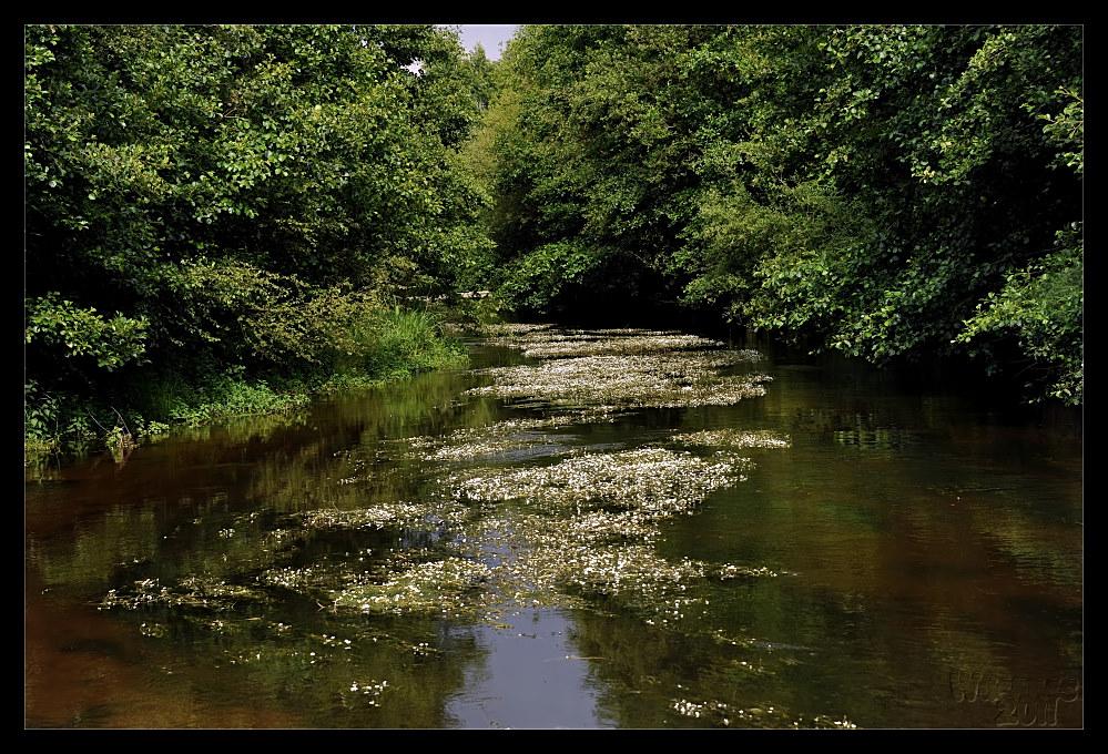 FlussBlühen