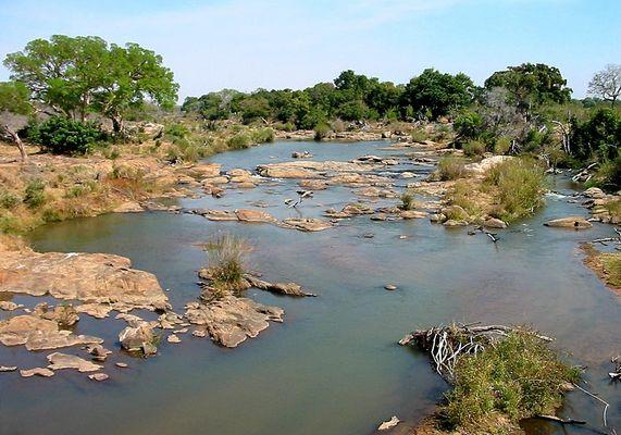 Flussüberquerung: Krokodil oder Stein?