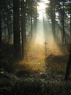 Flutlicht im Wald