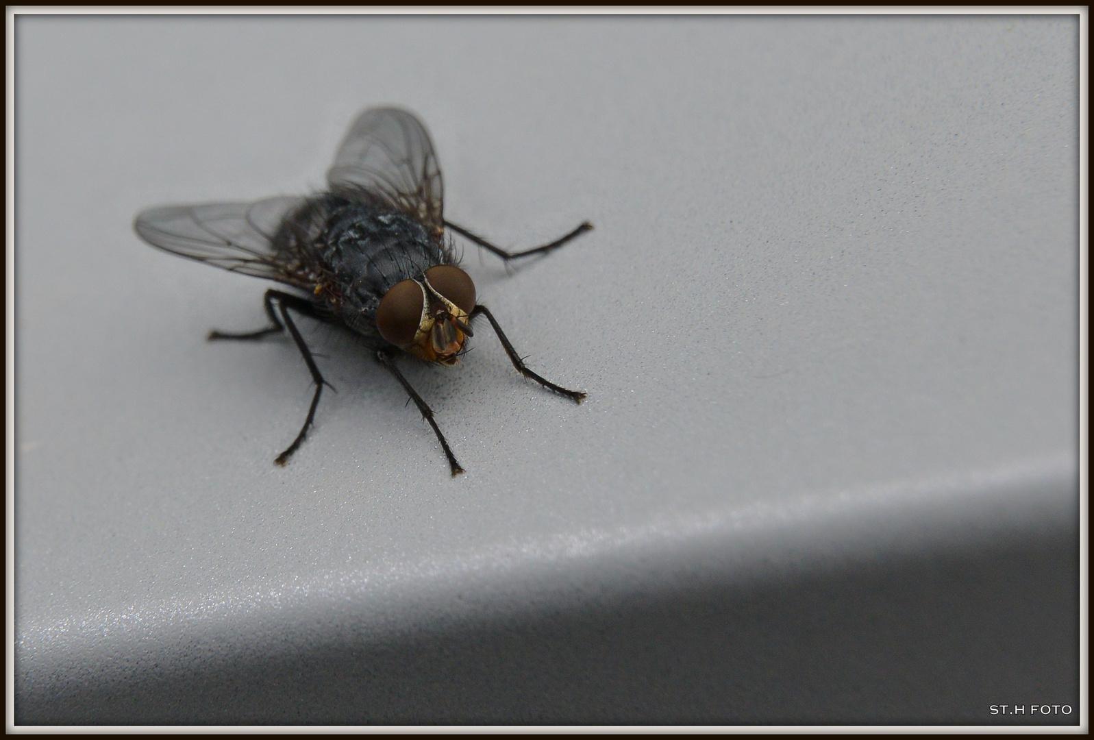 Fly....