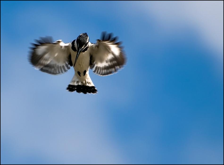 ...fly...