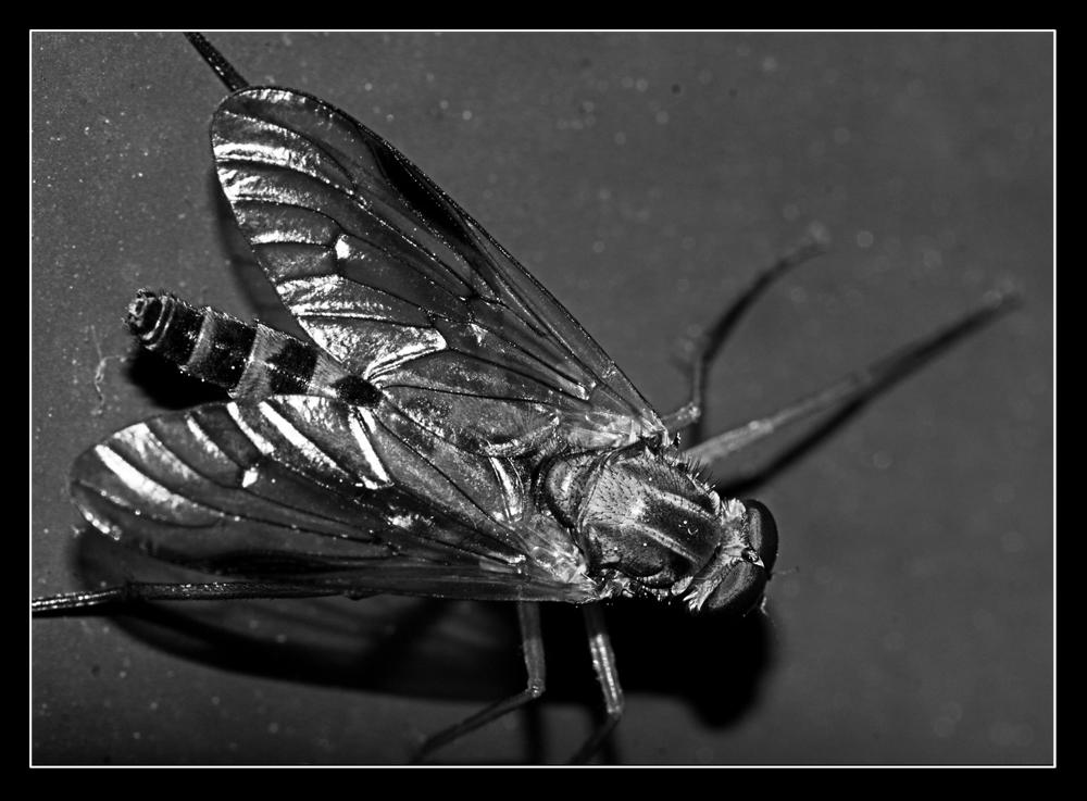 *fly away*