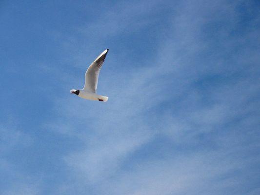Fly away !