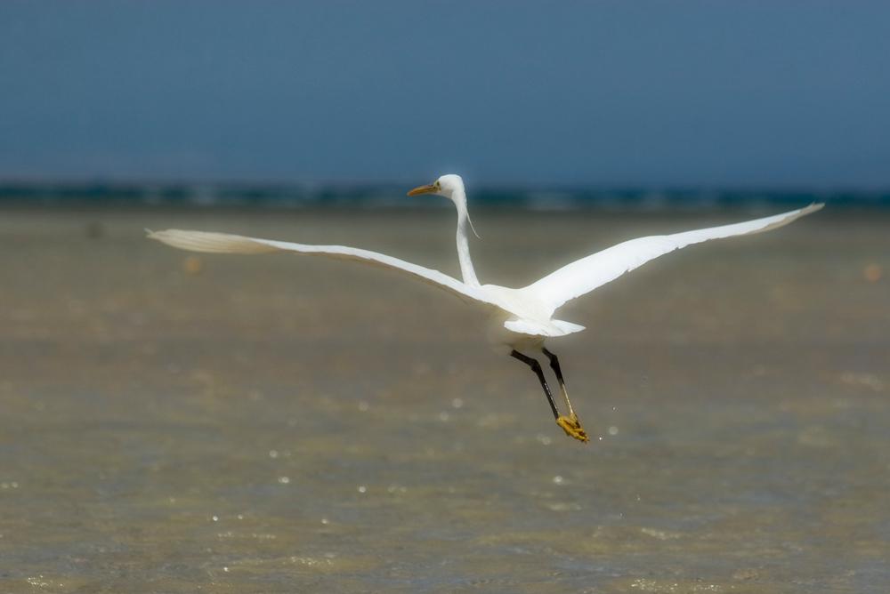Fly Away.....