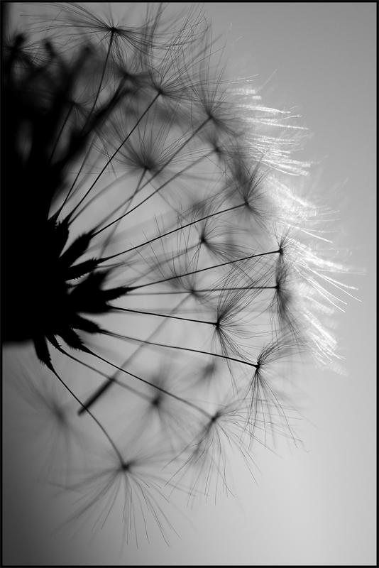 ...fly away...