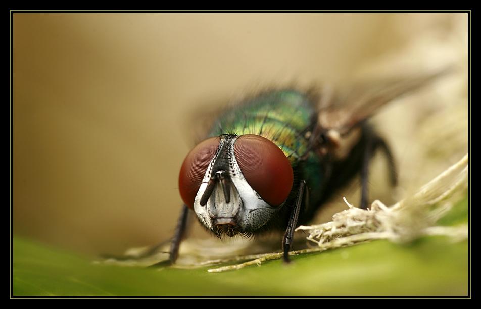 *Fly* - Die Zweite