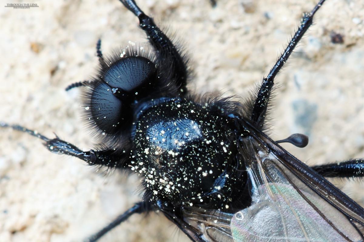 Fly-Eyes