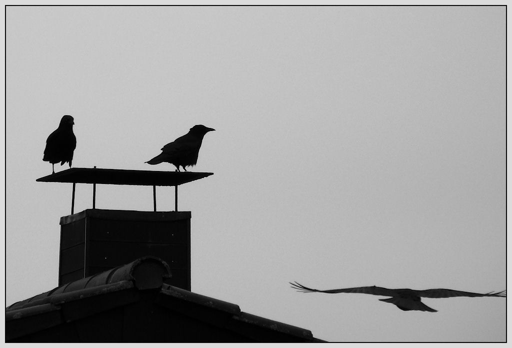 fly, fly away...