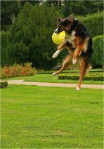 Fly flying high