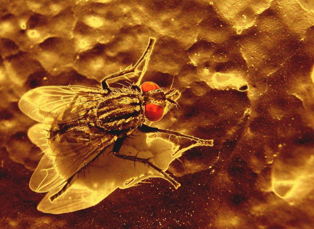 Fly from outer Space