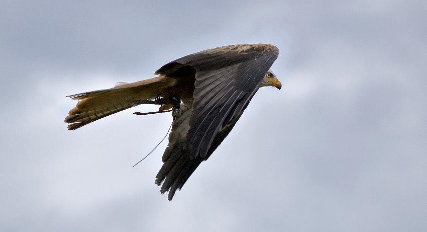 Fly like an Eagle....