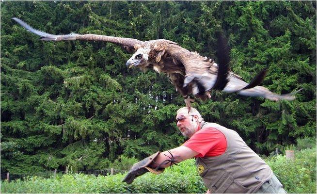 | Fly like an Eagle |