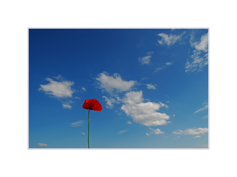 Fly me to the Mohn