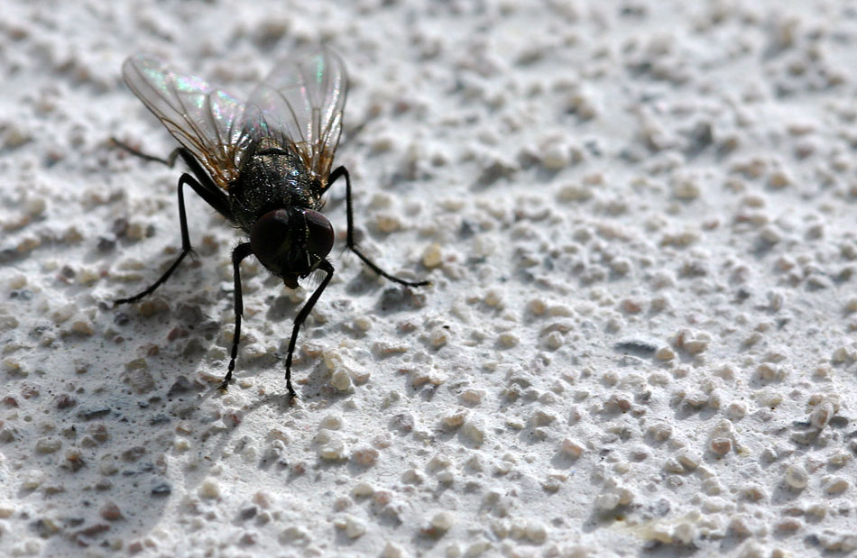 fly on wall
