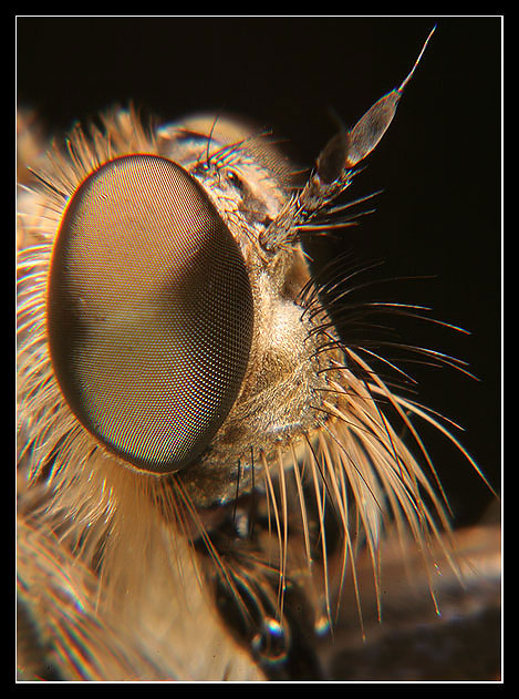 Fly Portrait1