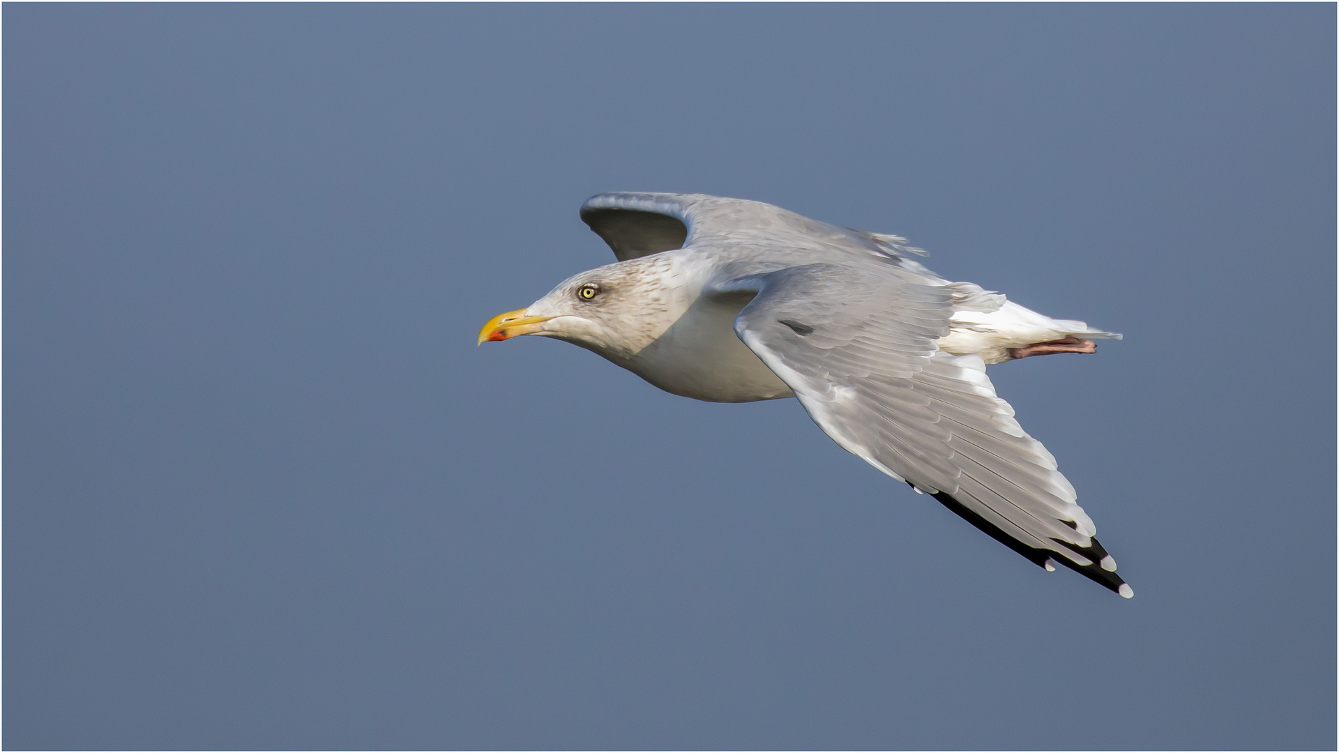 fly seagull fly  .....