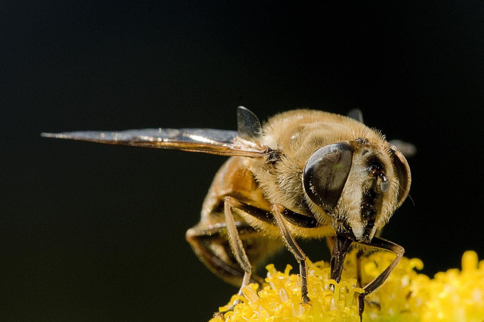 Fly01