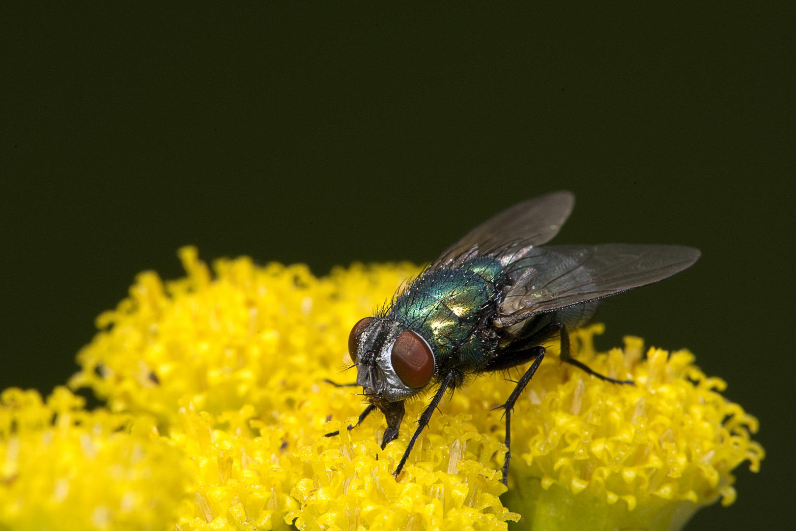 Fly03