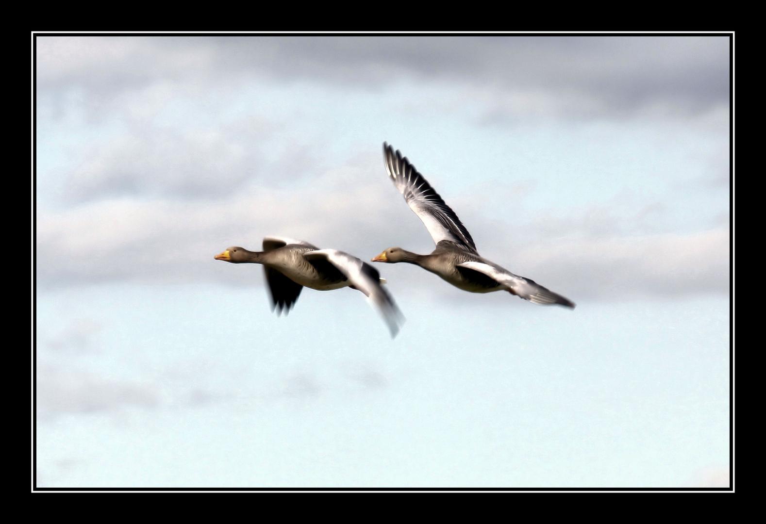 Flying......