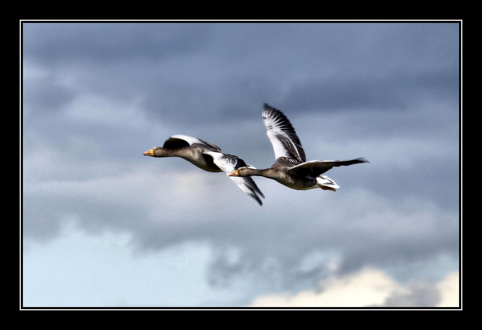 Flying..