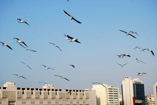 Flying away...