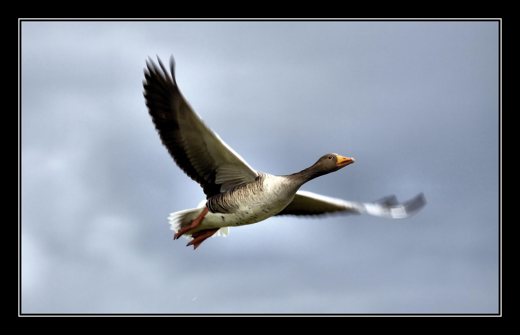 .Flying