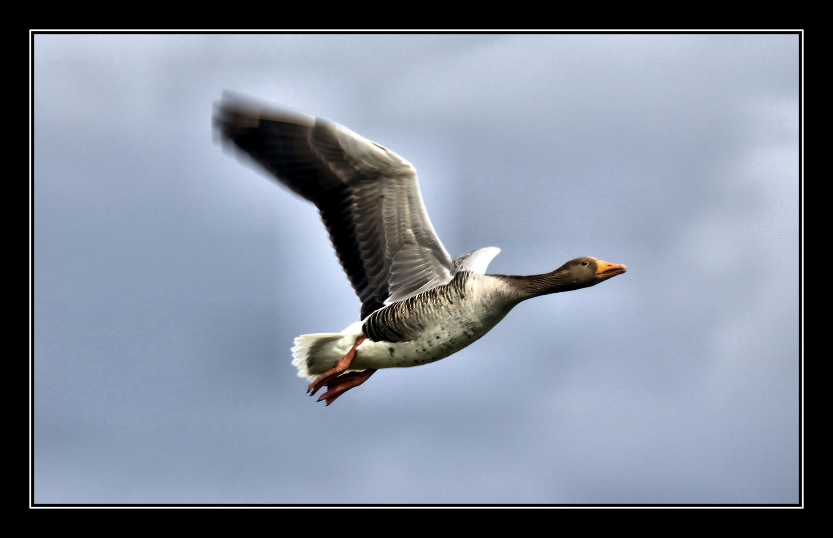 ...Flying