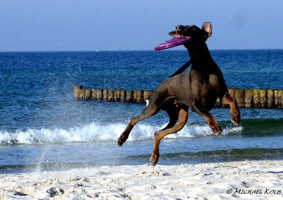Flying Dobi