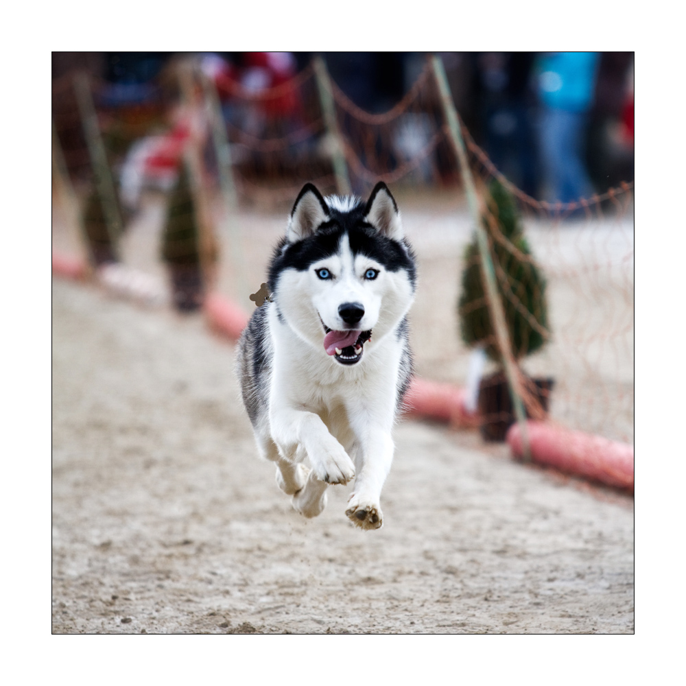 Flying Dog 1