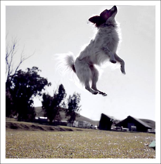Flying Dog...