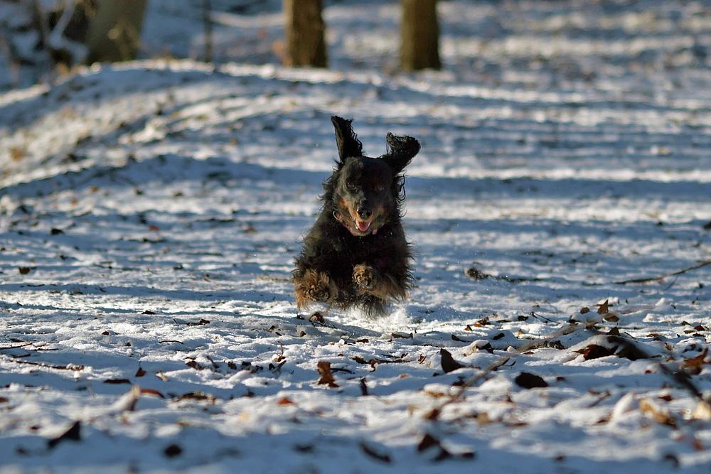 ... flying dog ...