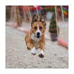 Flying Dog Ginny