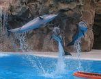 Flying Dolphins von D.M.