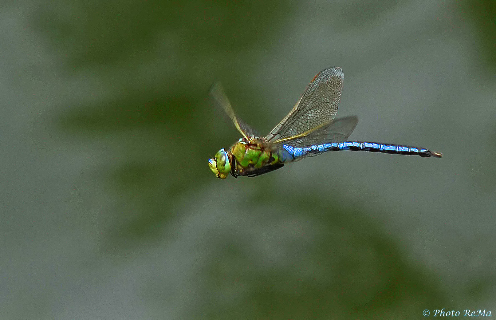 *Flying dragon*