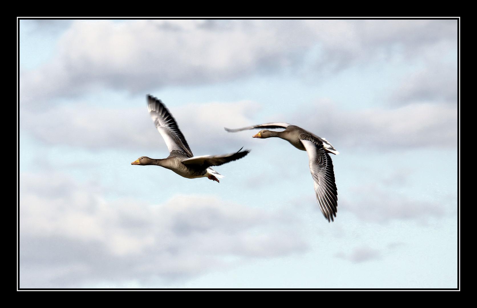 Flying.....