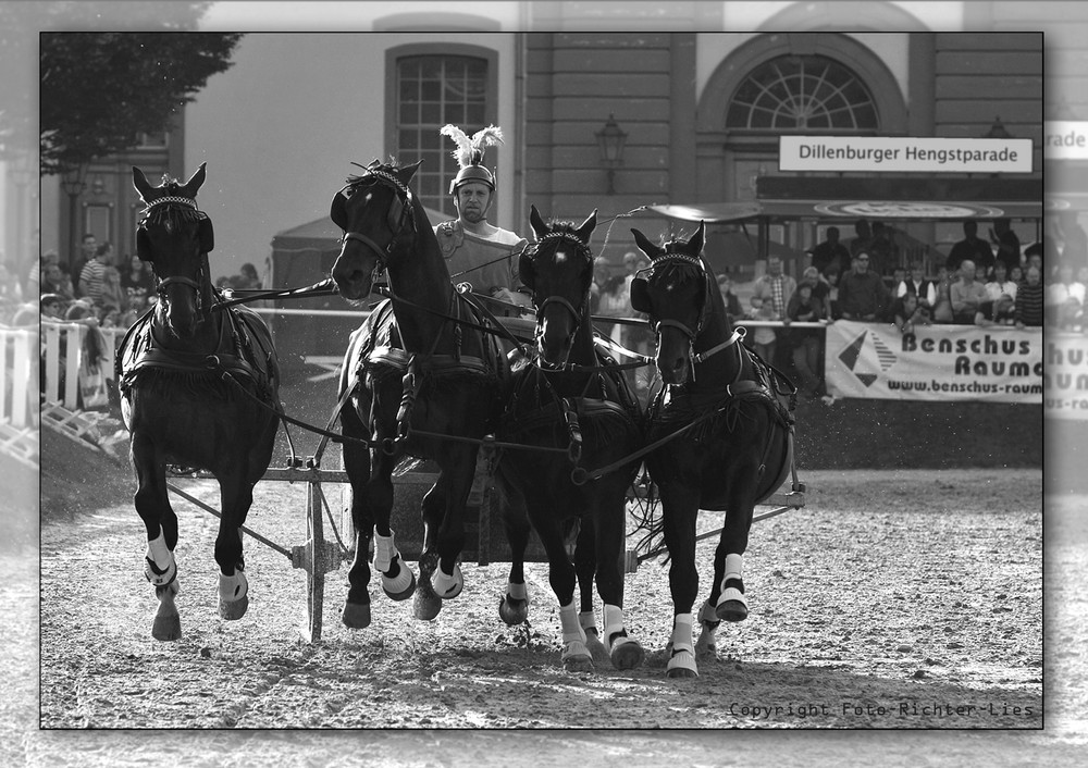 Flying Horses...