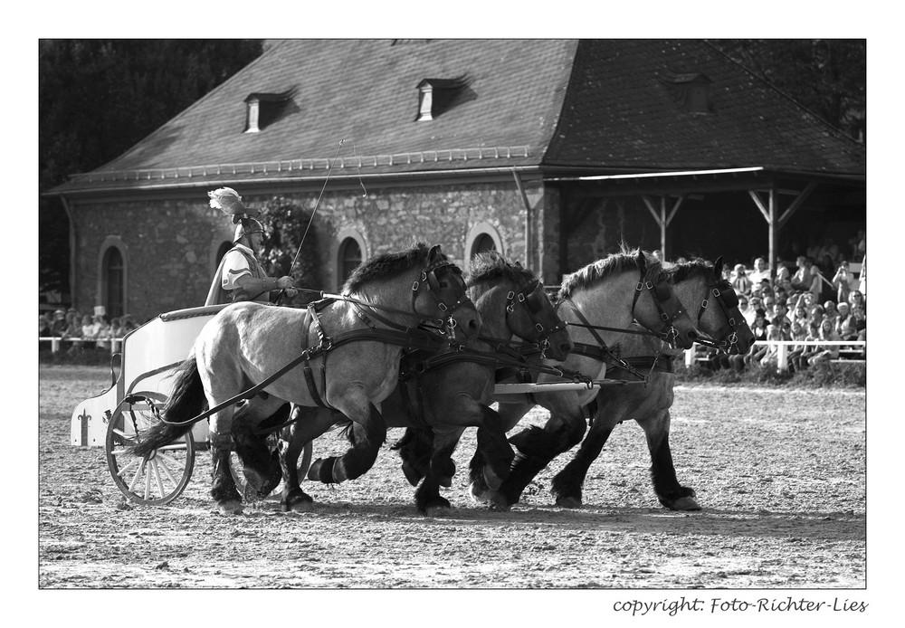 Flying Horses.....