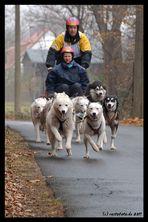 flying huskies