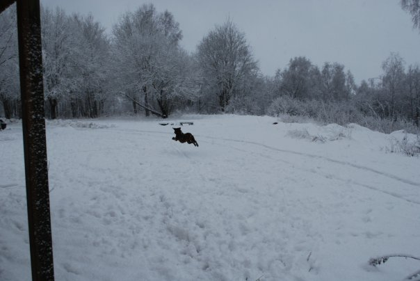 flying into the snow